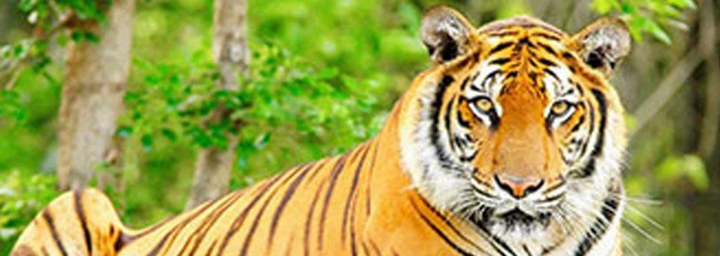 8nts, Tigers Trail