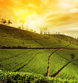 15nts, India Expedition – Tea and Tribes